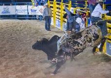 Helldorado days Rodeo Stock Image