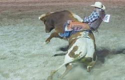 Helldorado days Rodeo Royalty Free Stock Images