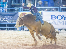 Helldorado days Rodeo. LAS VEGAS - MAY 16 : Cowboy Participating in a Bull riding Competition at the Helldorado days Rodeo , A professional Rodeo held in Las Stock Image