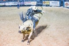 Helldorado days Rodeo. LAS VEGAS - MAY 16 : Cowboy Participating in a Bull riding Competition at the Helldorado days Rodeo , A professional Rodeo held in Las royalty free stock image