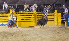 Helldorado dni rodeo Zdjęcia Stock