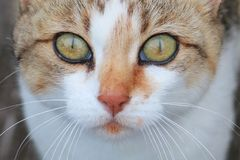 Helle Augen Stockbild