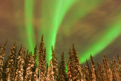 Helle Aurora-Bänder über Lit-Bäumen Stockfoto