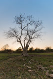 Helle Bäume des Schattenbildes Stockfoto