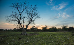 Helle Bäume des Schattenbildes Lizenzfreies Stockfoto