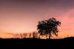 Helle Bäume des Schattenbildes Lizenzfreie Stockfotos