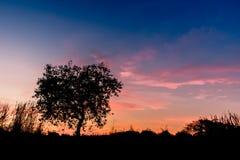 Helle Bäume des Schattenbildes Lizenzfreie Stockfotografie