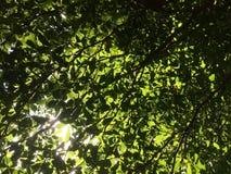Helle Blätter im Wald lizenzfreie stockbilder