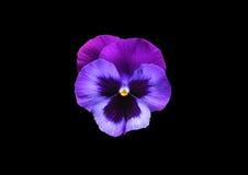 Helle Blume auf einem schwarzen Hintergrund Lizenzfreie Stockbilder