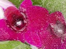 Helle Blume der organischen Abstraktion Stockfoto