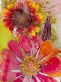 Helle Blume zwei eingefroren im Eis Stockbild