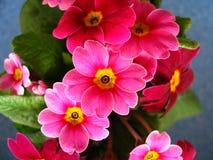 Helle Blumen Stockfotos