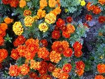 Helle Blumen der Freude und des Glückes Stockfoto