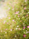 Helle Blumen in der Sonne Stockbild