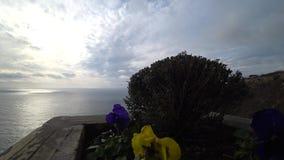 Helle Blumen im Wind gegen das Meer stock video