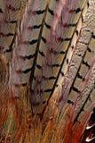 Helle braune Federgruppe irgendeines Vogels Stockfotografie
