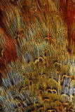 Helle braune Federgruppe irgendeines Vogels Stockbilder