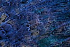 Helle braune Federgruppe irgendeines Vogels Lizenzfreie Stockbilder