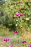 Helle bunte Blumen im Garten lizenzfreie stockfotografie