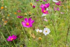 Helle bunte Blumen im Garten lizenzfreie stockbilder