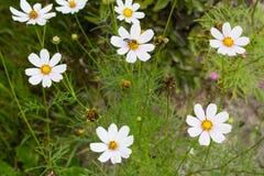 Helle bunte Blumen im Garten stockfoto