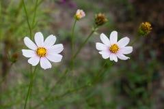 Helle bunte Blumen im Garten stockfotos