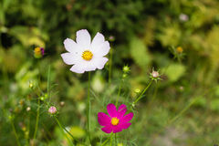 Helle bunte Blumen im Garten lizenzfreies stockfoto