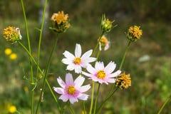 Helle bunte Blumen im Garten lizenzfreies stockbild