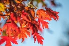 Helle Fall-Blätter Stockfotografie