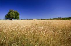 Helle Farben der Erntejahreszeit Stockfoto