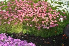 Helle Farben der Natur stockfoto