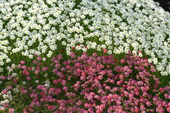Helle Farben der Natur stockfotos