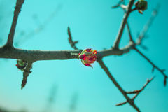 Helle Farben des Frühlinges Stockbild