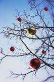 Helle farbige Weihnachtsdekorationen auf einem entlaubten Baum in MOS Stockfoto
