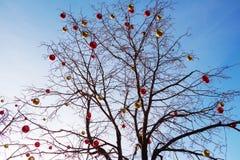 Helle farbige Weihnachtsdekorationen auf einem entlaubten Baum in MOS Lizenzfreie Stockfotografie