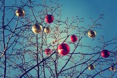 Helle farbige Weihnachtsdekorationen auf einem entlaubten Baum in MOS Lizenzfreies Stockbild