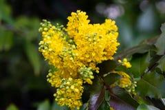 Helle Frühlings-Blumen in unscharfem Hintergrund stockfotografie