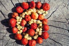 Helle Frucht auf hölzernem Hintergrund Lizenzfreie Stockbilder