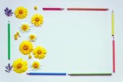 Helle Gänseblümchen und farbige Bleistifte sind in Form eines Rahmens eingeschaltet Lizenzfreies Stockbild