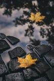 Helle Gelbblätter in der Pfütze auf dem Boden Lizenzfreie Stockfotografie