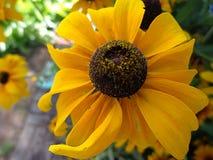 Helle gelbe Blume Stockbilder