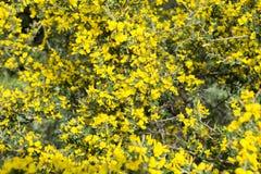Helle gelbe Blume Lizenzfreie Stockfotos