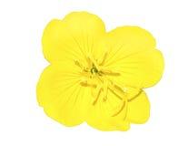 Helle gelbe Blume Lizenzfreie Stockfotografie
