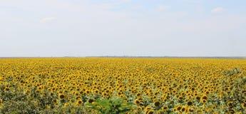 helle gelbe Blume mit Biene in der Mitte Stockfotos