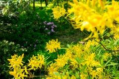 Helle gelbe Blumen Lizenzfreie Stockfotos