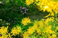 Helle gelbe Blumen Lizenzfreie Stockfotografie