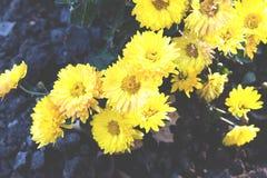 Helle gelbe Blumen Stockfotos