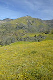 Helle gelbe Blumen auf den grünen Frühlingshügeln Lizenzfreies Stockbild