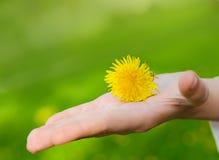 Helle gelbe Blumenlüge auf einer Hand Stockfotos