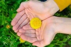 Helle gelbe Blumenlüge auf einer Hand Stockfotografie